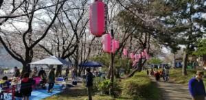 お花見_上大島キャンプ場1